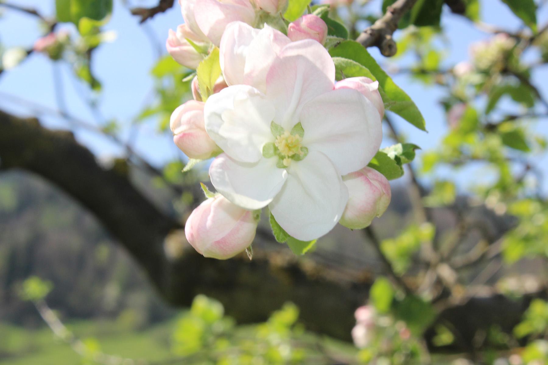 Frühlingsboten mit Spargeln und Bärlauch